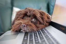 Image de Amener son chien au bureau : que dit la loi ?